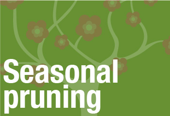 header-Seasonalpruning
